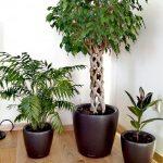 грижа за стайните растения
