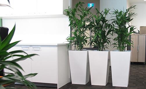 Интериорните растения като тренд за здраве и красота