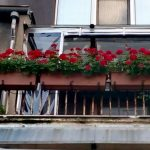 цъфтящи цветя за балкона