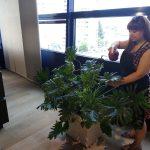 поддръжка на интериорна растителност
